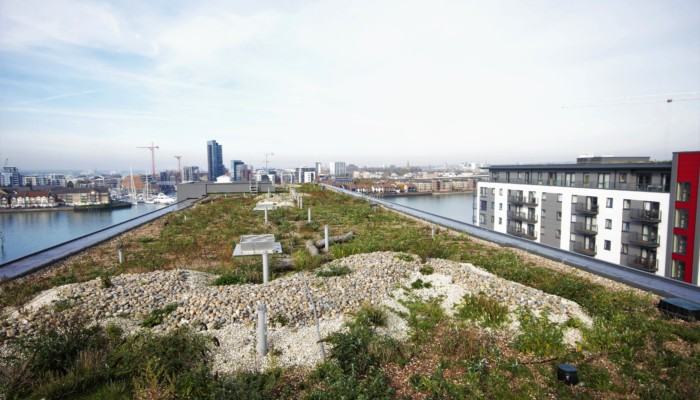 Biodiverse Living Roof